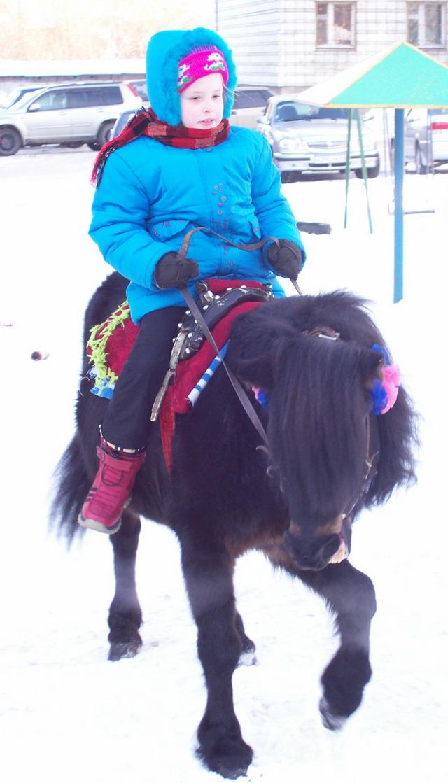 Лошади в аренду. Черные, белые, в яблоках, пони. Как будет
